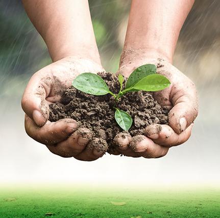 environmental rehabilitation